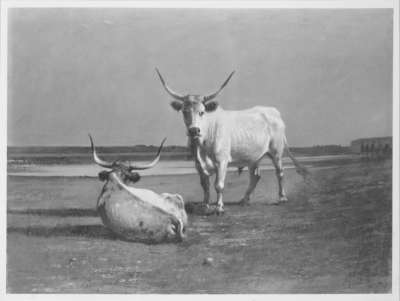 Zwei Rinder in der Puszta