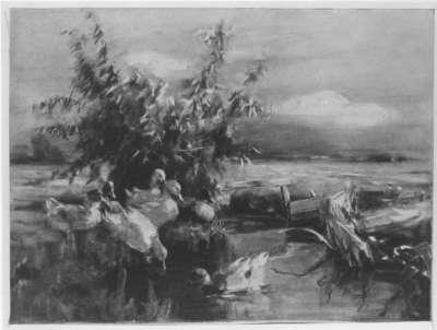 Enten vor Gebüsch am Wasser