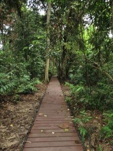 Der Weg in den Dschungel