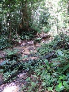 Weg im Dschungel