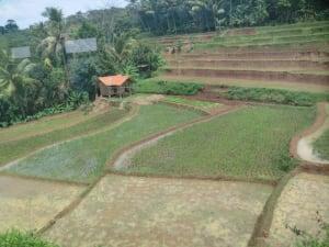 Nassplantagen in Indonesien