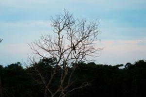 Ein Nashornvogel