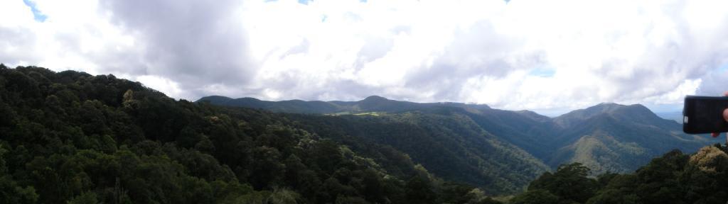Blick über den Dorrigo Nationalpark