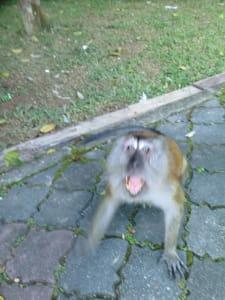 Affe im botanischen Garten