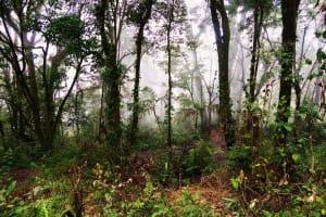 Mystischer Dschungel
