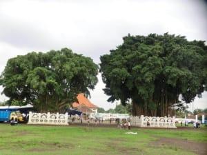 Wunschbäume auf Platz in Yogya