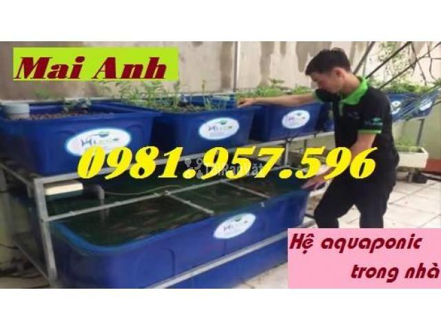 Thùng nhựa nuôi hải sản,thùng nuôi cá koi, thùng nuôi cá cảnh - 1/3