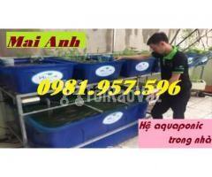 Thùng nhựa nuôi hải sản,thùng nuôi cá koi, thùng nuôi cá cảnh - Hình ảnh 1/3