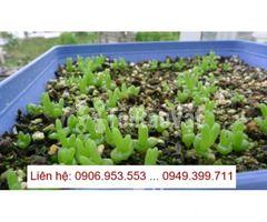 Phòng nảy mầm tiêu chuẩn Buồng sinh trưởng cho thực vật