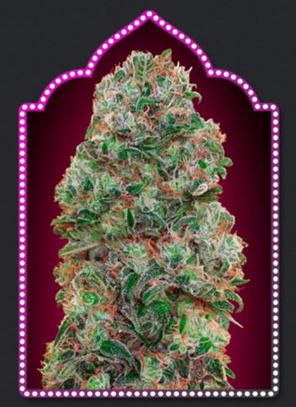 Featured Image of Bubble Gum