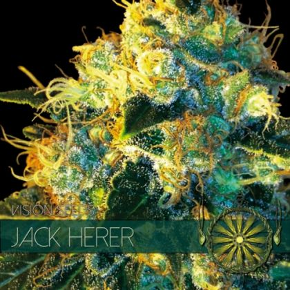 Mostly Sativa: Jack Herer