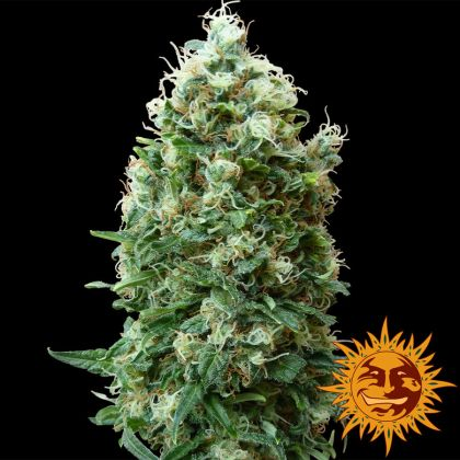 Mostly Indica: Phatt Fruity