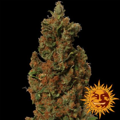Featured Image of Red Diesel