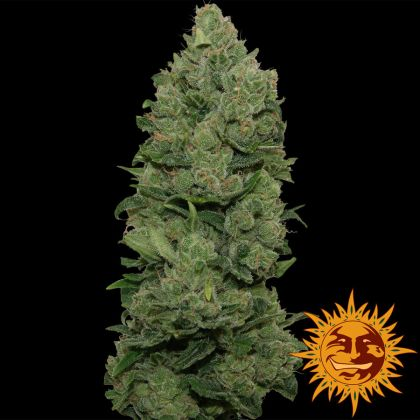Indica / Sativa: Top Dawg