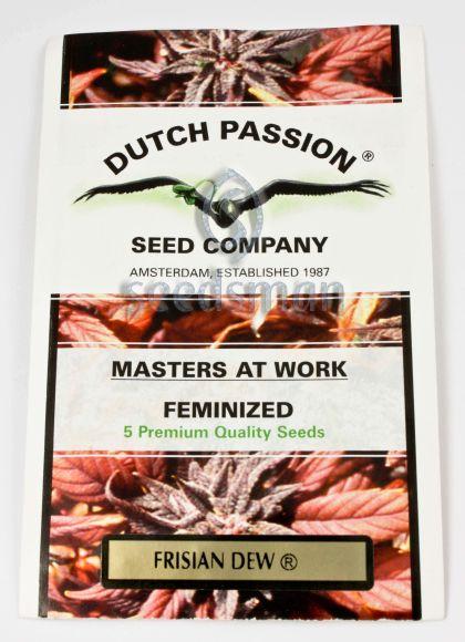 Indica / Sativa: Frisian Dew