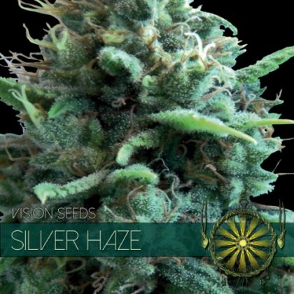 Mostly Sativa: Silver Haze