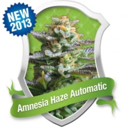 Mostly Sativa: Amnesia Haze Automatic