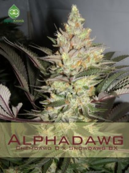 Indica / Sativa: Alpha Dawg