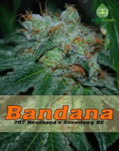 Mostly Sativa: Bandana