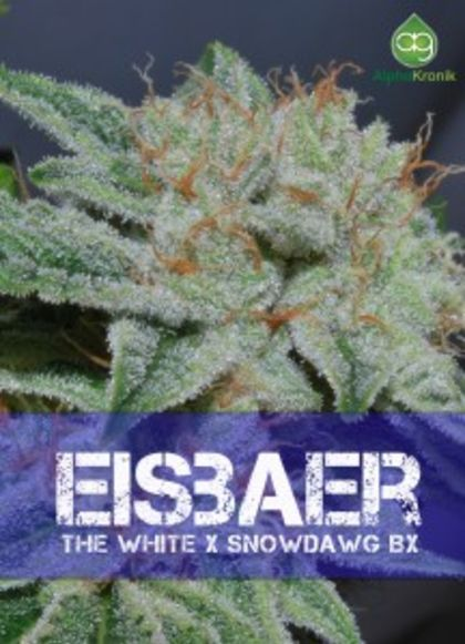 Mostly Indica: Eisbaer