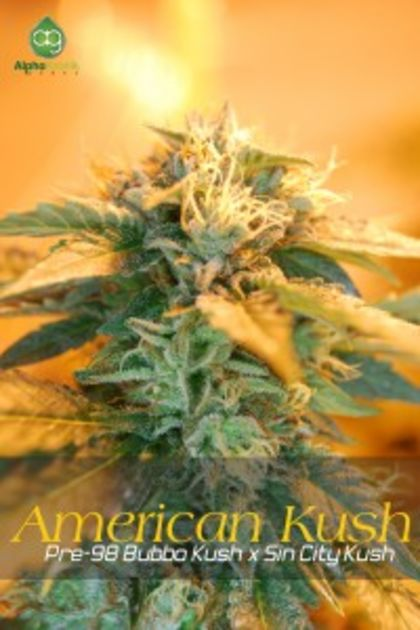Mostly Indica: American Kush