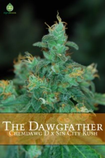 Indica / Sativa: The Dawgfather