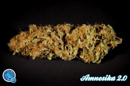 Mostly Sativa: Amnesika 2.0