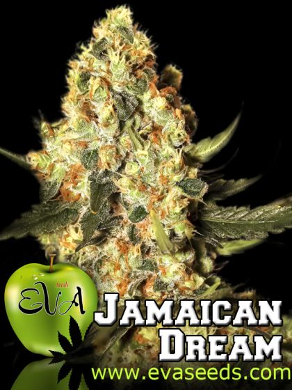 Mostly Sativa: Jamaican Dream