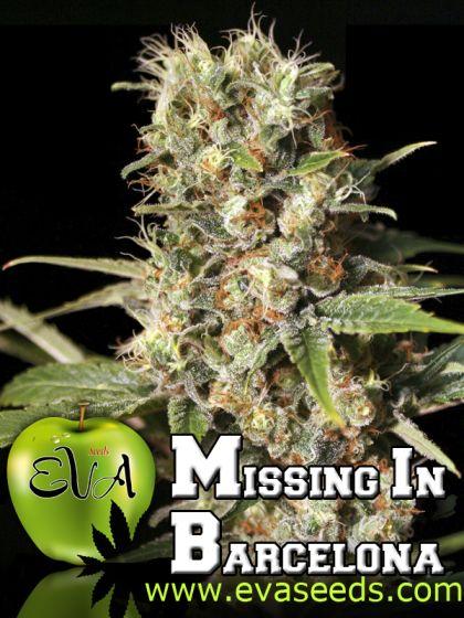 Missing In Barcelona (M.I.B.)