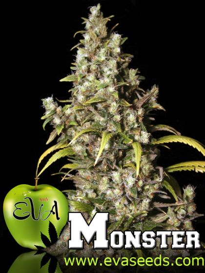 Mostly Sativa: Monster