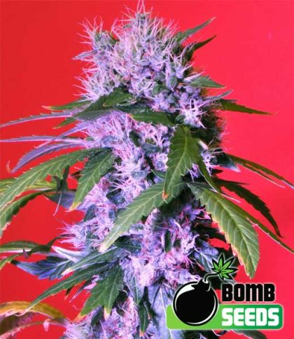 Mostly Indica: Berry Bomb