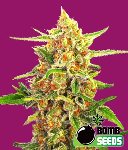 Mostly Indica: Cherry Bomb