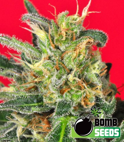 Mostly Indica: Cluster Bomb