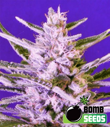 Mostly Indica: Ice Bomb