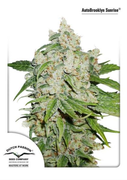 Indica / Sativa: Autobrooklyn Sunrise