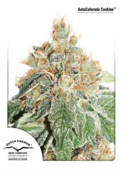 Featured Image of Autocolorado Cookies