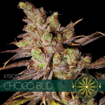 Featured Image of Choco Bud
