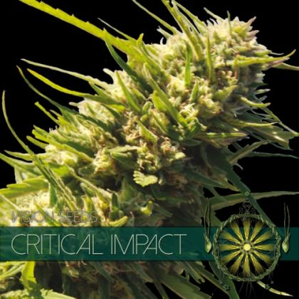 Featured Image of Critical Impact