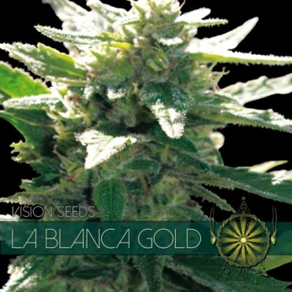 Featured Image of La Blanca Gold