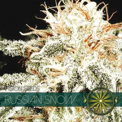 Mostly Indica: Russian Snow