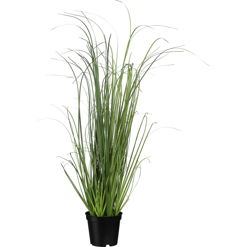Heinäkasvi