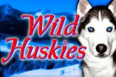 Wild Huskies
