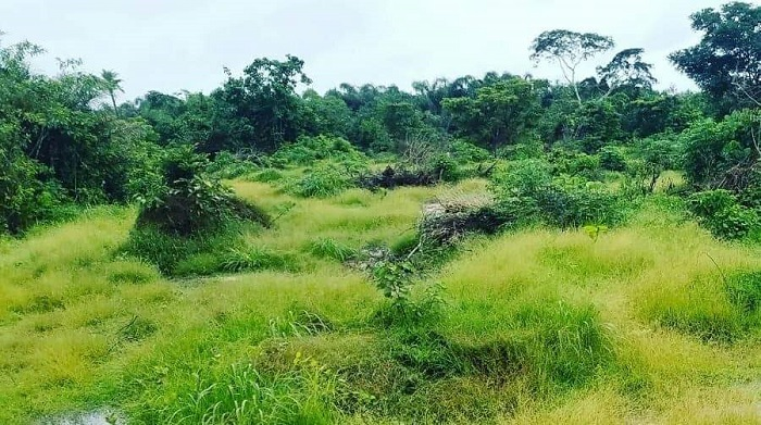 32acres (190 plots) at Ring Road, Ibadan for sale