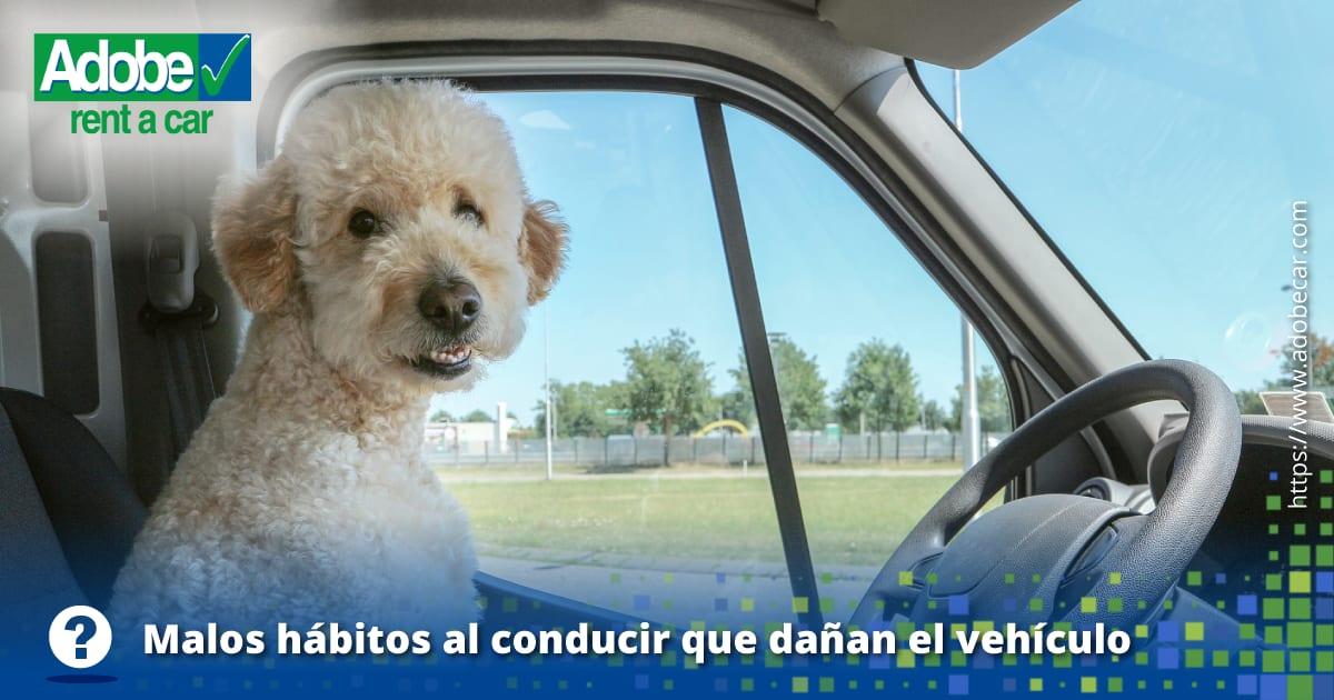 6 - Rentar un vehículo eléctrico, la mejor opción del futuro