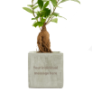 Bonsai Concrete Plant Pots in Rock