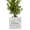 Christmas Tree Concrete Plant Pots in Marble