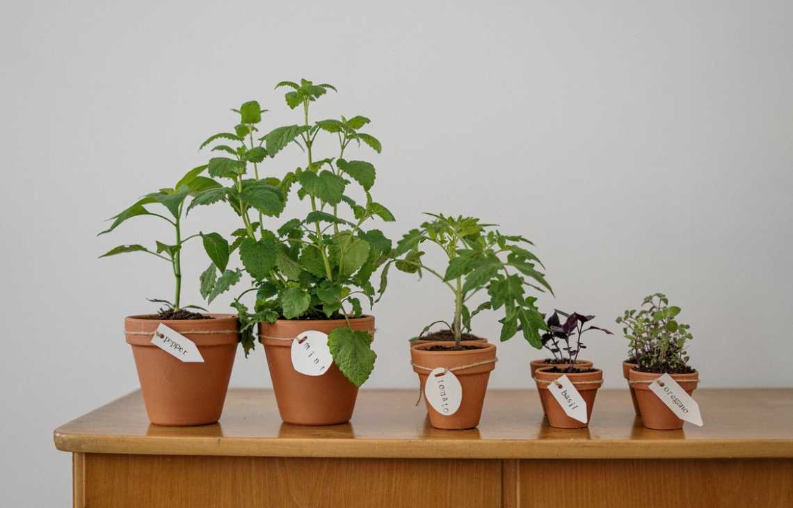 Best-Selling Promotional Seeds & Plants To Let Your Brand Grow - Literally!