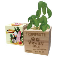 Eco-friendly promotional plants