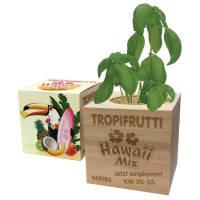 Eco-friendly promotional plants