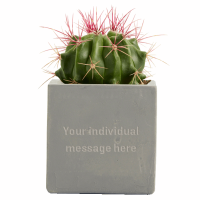 Promotional Concrete Planted Cactus Pots with engraved branding by Total Merchandise